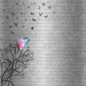 fondo poesia mariposa