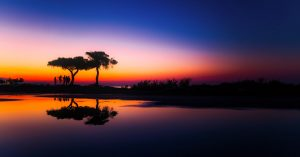 reflejo en el agua de arbol